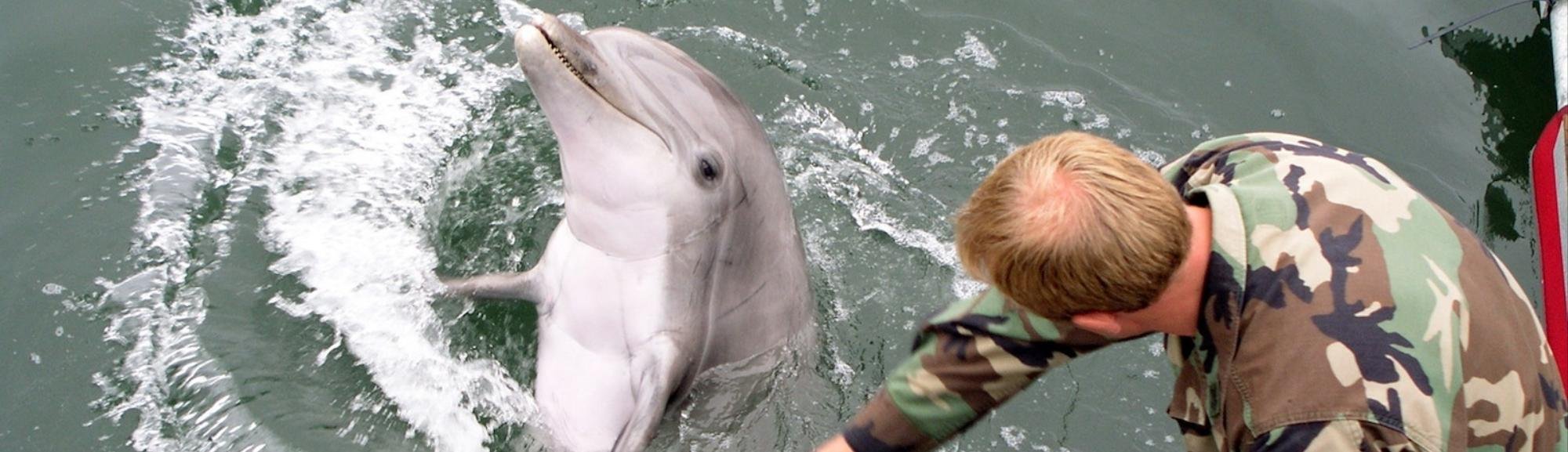Russia Has Taken Control of Ukraine's Military Attack Dolphins