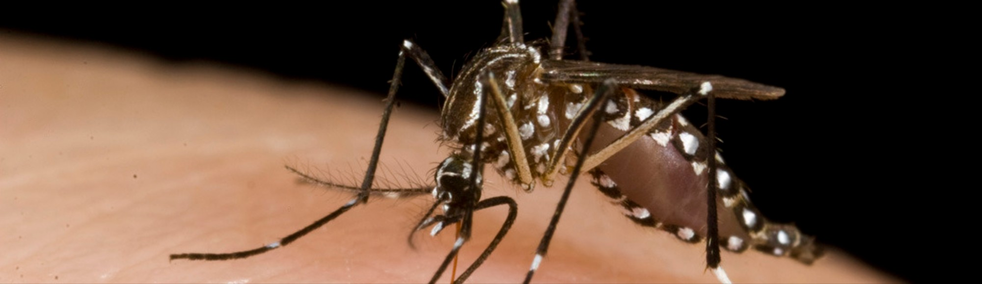 The Chikungunya Virus Is Expected to Make Its US Debut This Summer