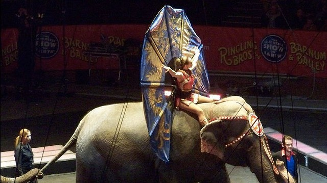 Animal Rights Groups Pay Circus Nearly $16M in Settlement Over Elephant Abuse Allegations