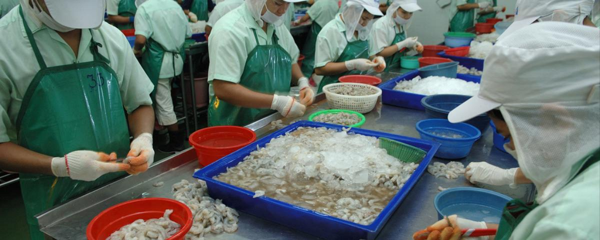 Thai Shrimp Linked to Slave Labor Sold in World's Biggest Stores