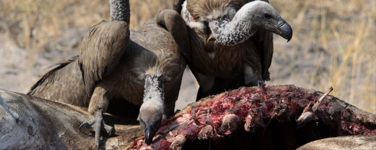 "Talons Out: Argentina Desperately Fighting ""Vulture Funds"" Over Debt"