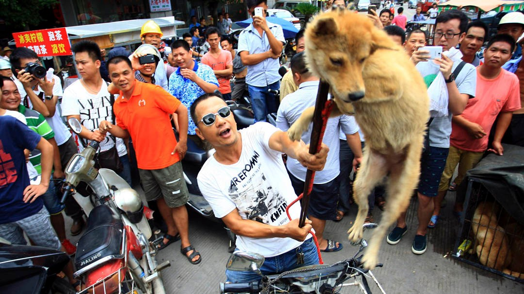 Image result for yulin festival china