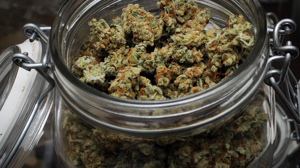 Meet the Researcher Who Was Fired After Trying to Give Weed to Veterans