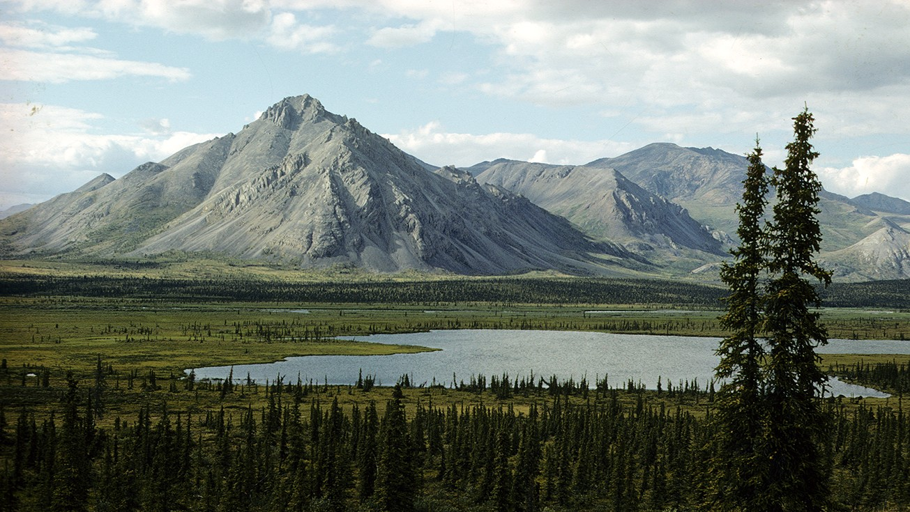 Republicans Want to Drill for Oil in the Arctic National Wildlife Refuge