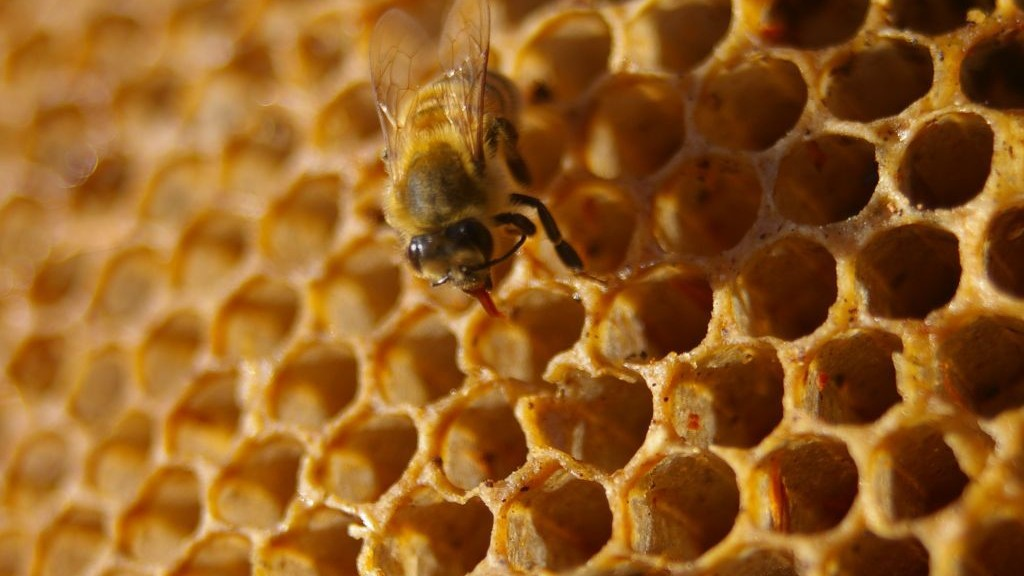 Here's What Climate Change Could Do to Honey Bees
