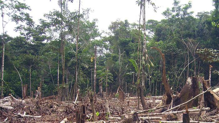 After Years of Decline, Deforestation in the Amazon Might Be On the Rise Again