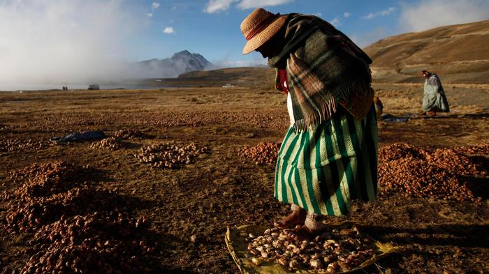 Climate Change Might Be the Greatest Threat to Potato Cultivation in 8,000 Years