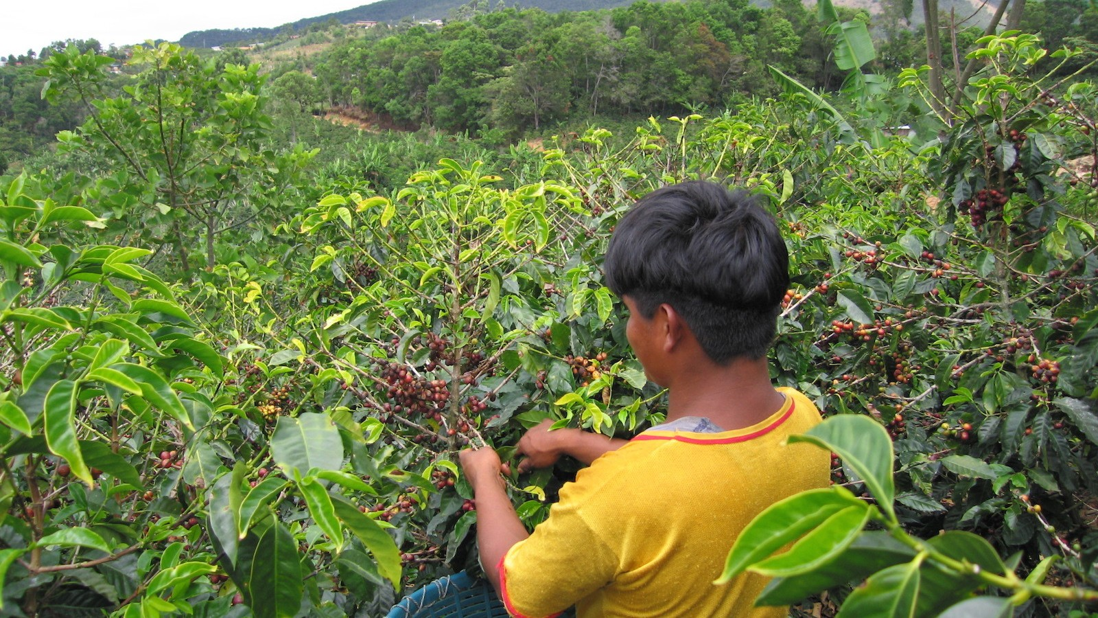 Fair Trade, Free Markets, and the Bitter Fight Behind Your Morning Cup of Coffee