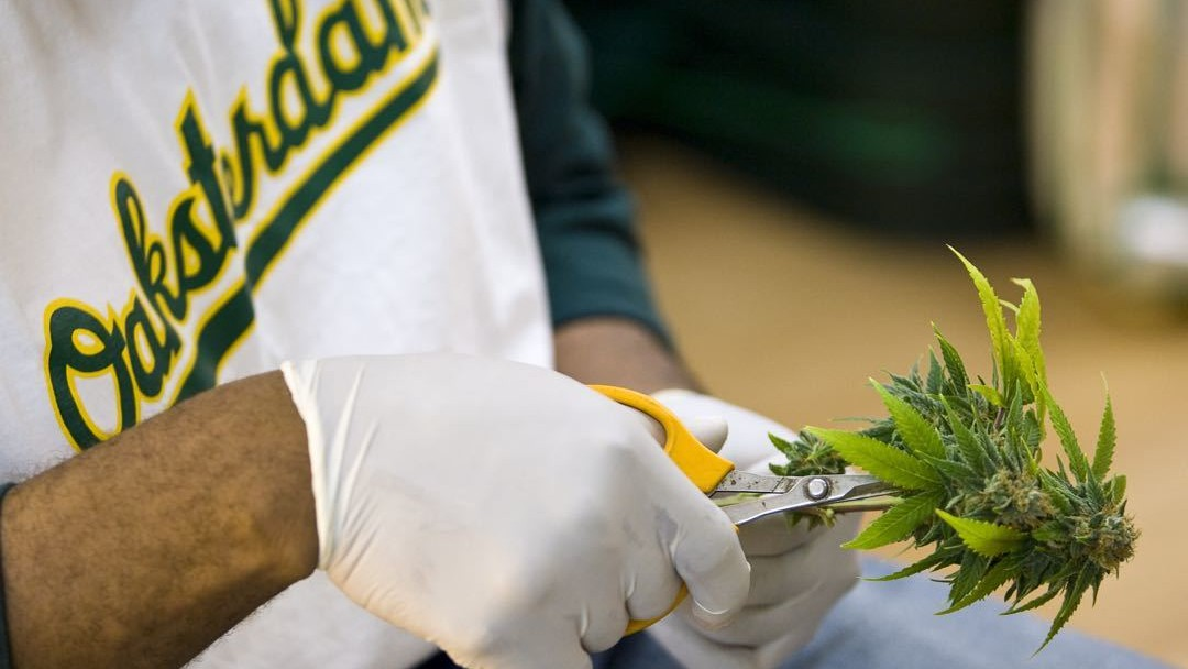 Medical Marijuana License Is No Shield Against Felony Possession Charges on University Campuses