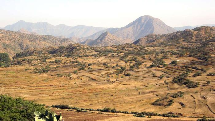 UN Report Alleges Forced Labor at Canadian-Owned Mine in Eritrea
