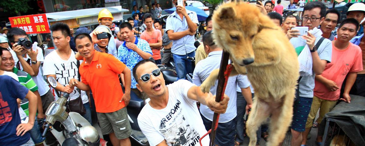 Thousands Of Dogs Will Be Eaten In China To Celebrate The Summer Solstice