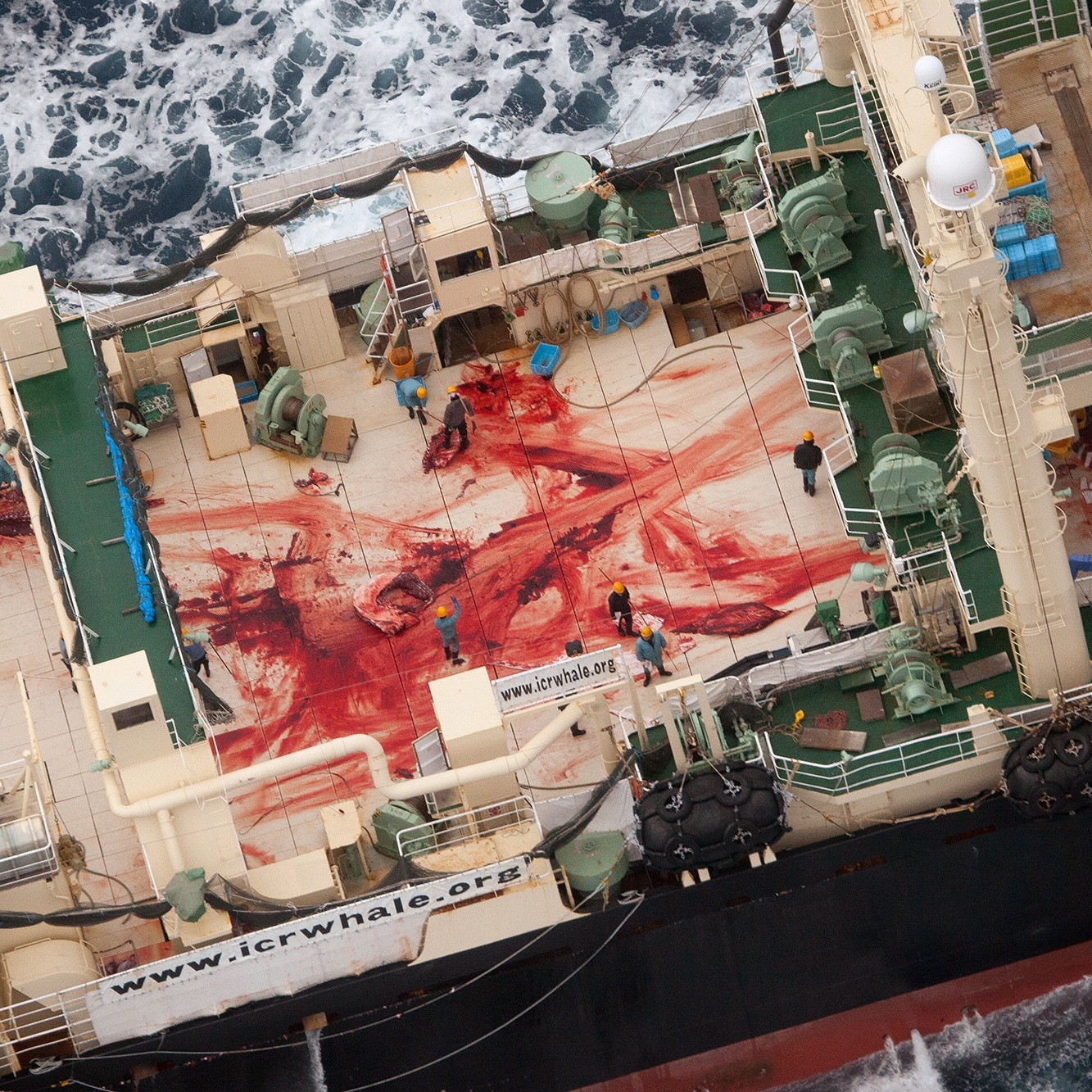 japan says it will resume whaling in the antarctic vice news