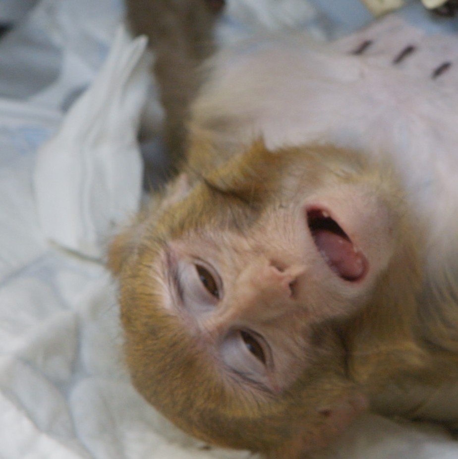 inside the monkey lab the ethics of testing on animals vice news