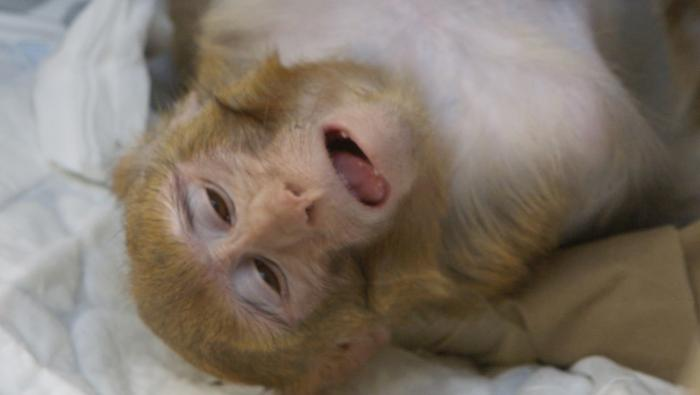 Inside the Monkey Lab: The Ethics of Testing on Animals