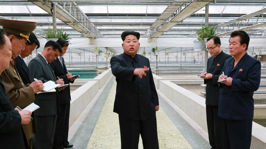 North Korean Leader Kim Jong-un Executes a Turtle Farmer For 'Incompetence'