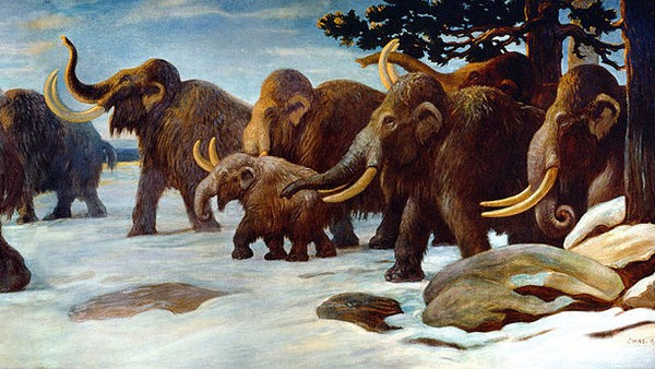 Here's What Caused Megafauna Like the Mammoths to Go Extinct