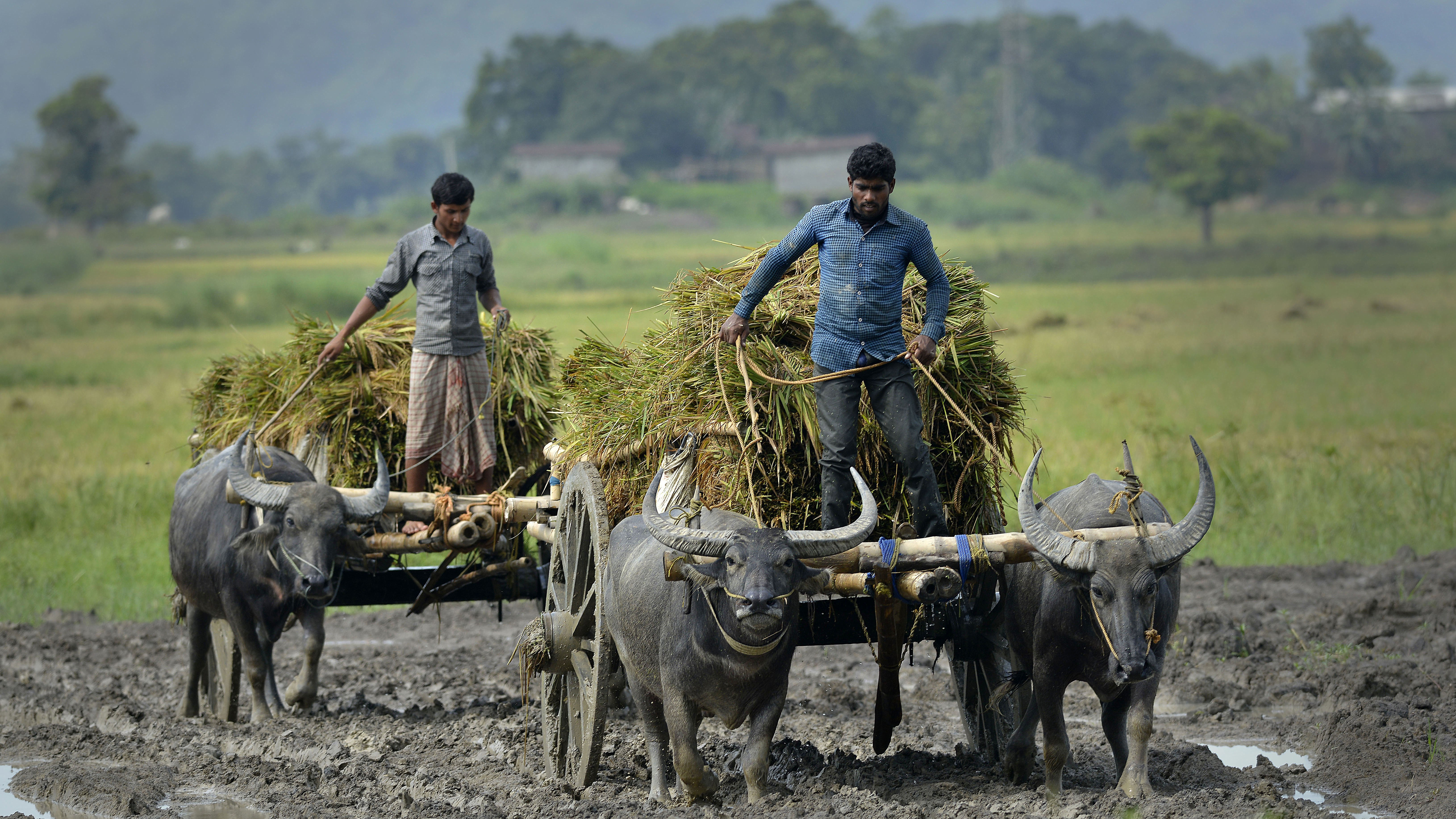 25,000 Indian Farmers Are Threatening to Kill Themselves Tomorrow