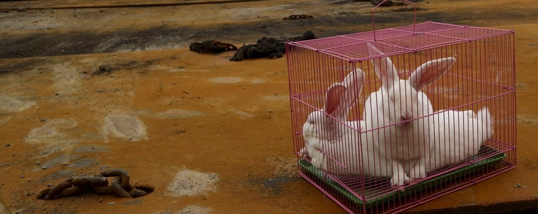 Caged Bunnies Placed at Tianjin Explosion Site to Reassure Public as New Fires Erupt