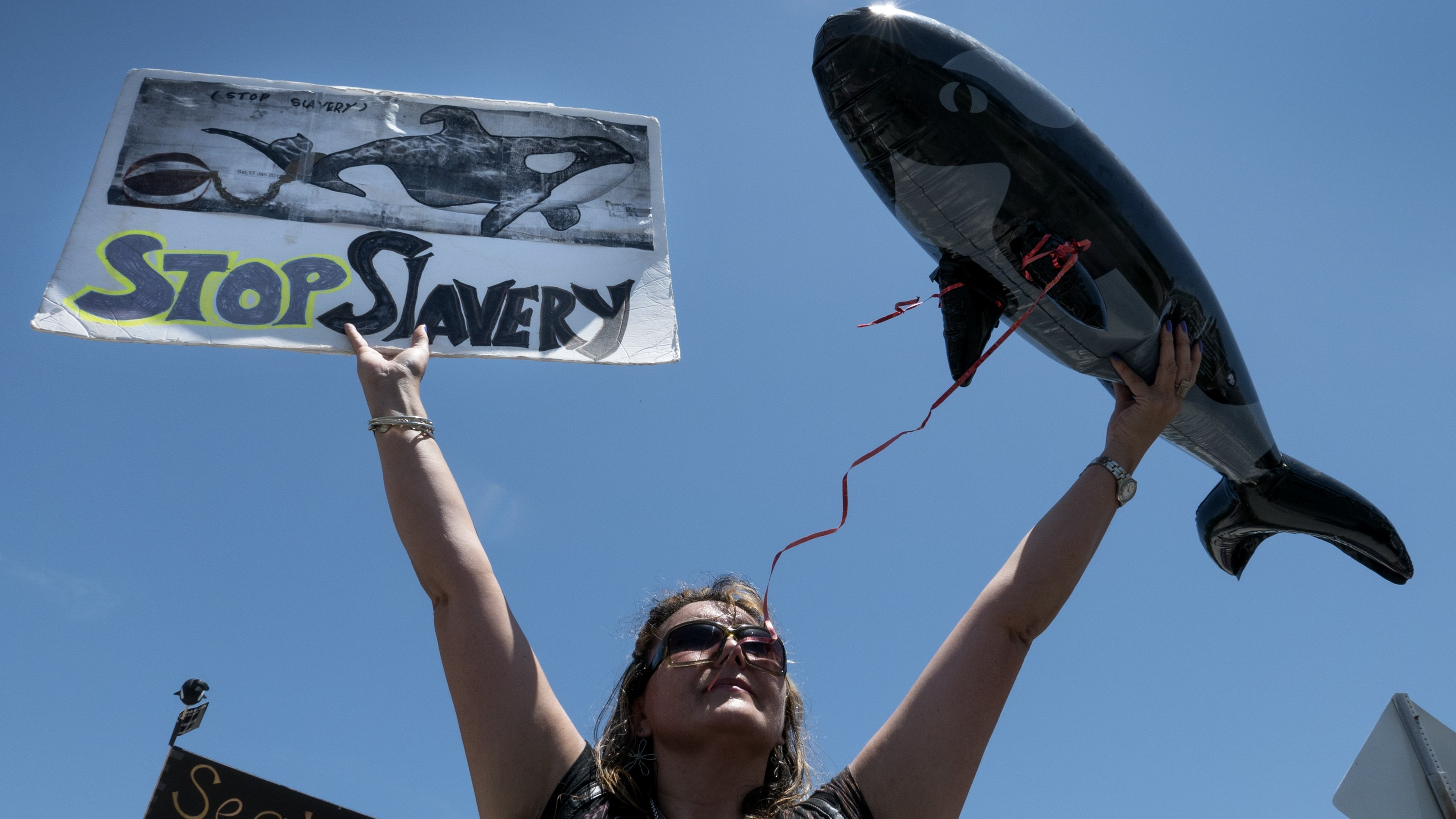California Bans SeaWorld From Breeding or Transferring Killer Whales in Captivity