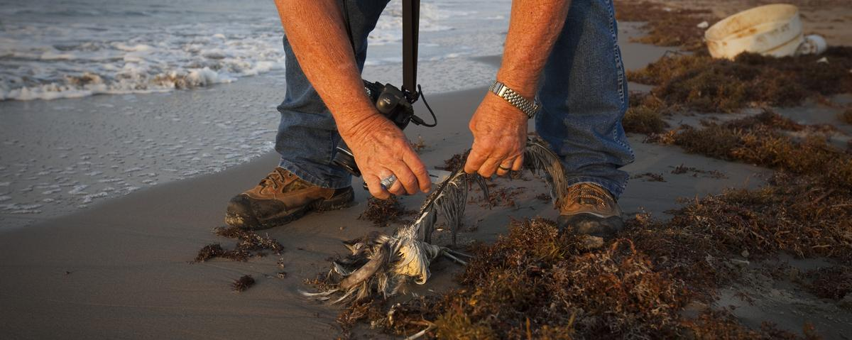 The Federal Government Says Billions of Animals Died From the BP Disaster