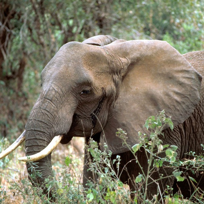 an analysis of african wildlife in africa The orphanage has been featured in countless documentaries and is now world  renowned for its pioneering work and is famed as one of africa's largest and.
