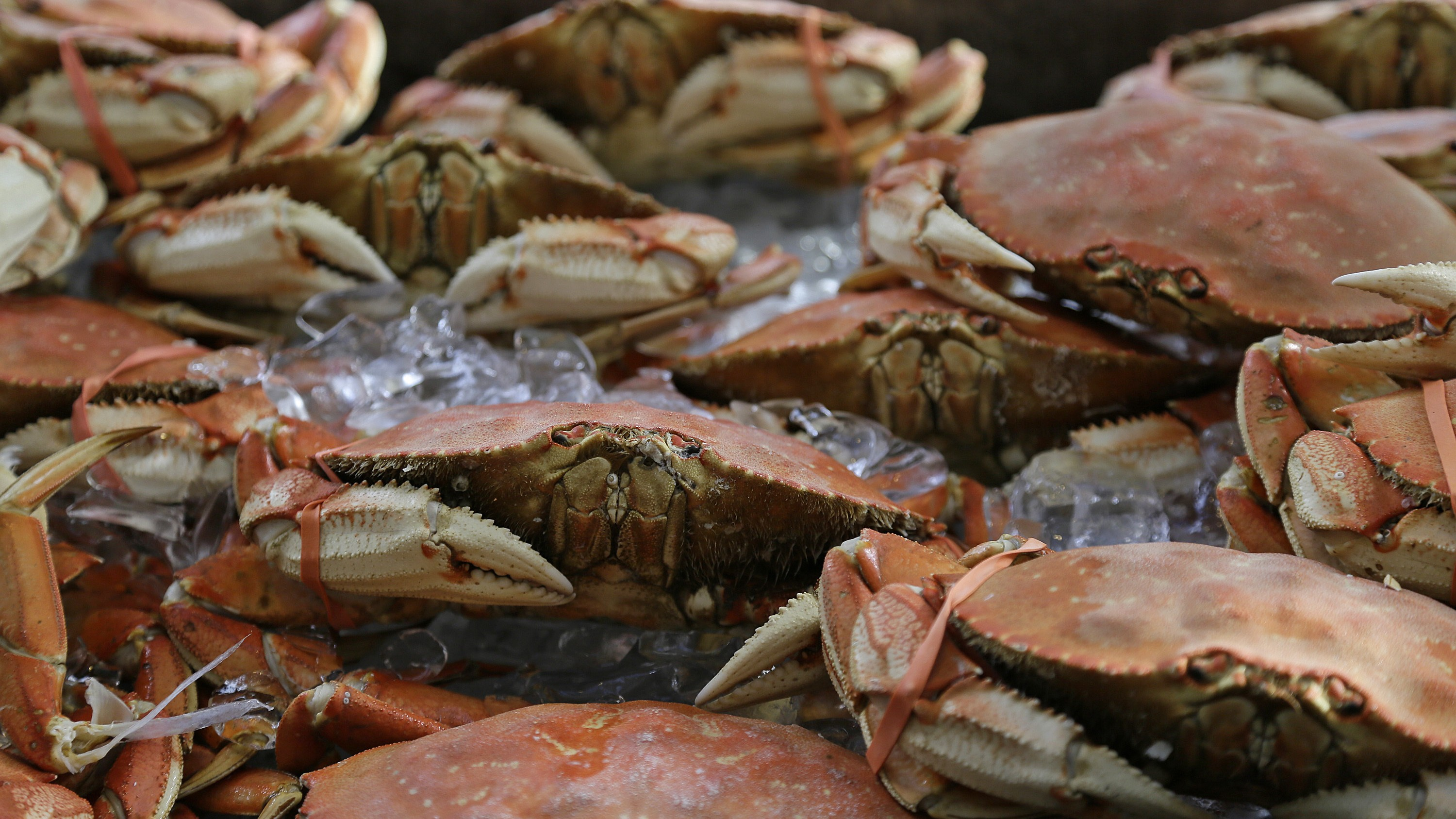 California's Fishing Industry Feels the Pinch From Toxic Crabs