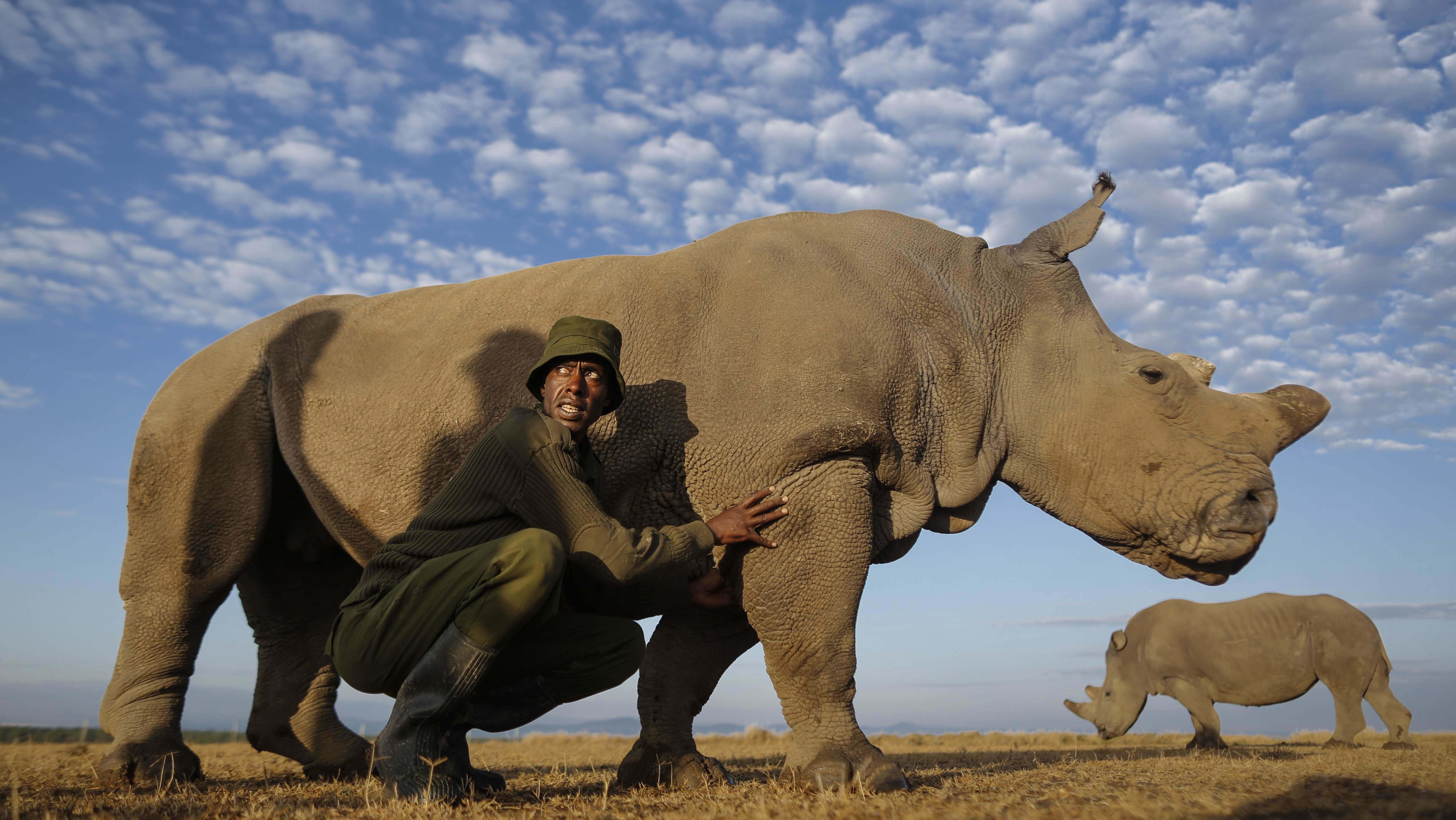 South African Court Overturns Ban on Domestic Trade in Rhino Horn