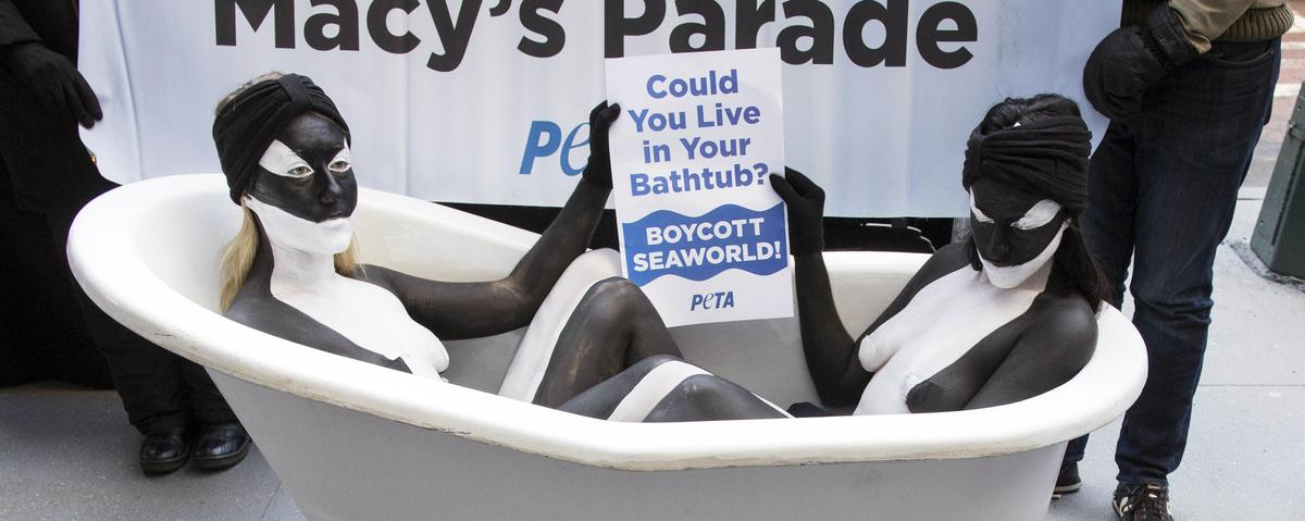 SeaWorld Says Its Spies Will No Longer Infiltrate Animal Rights Groups