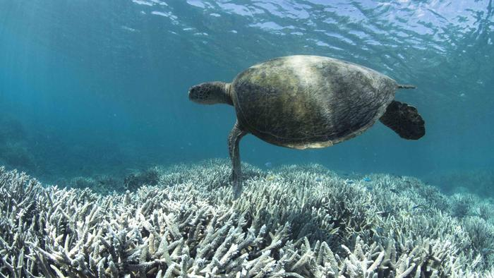 The World's Coral Reefs Are Undergoing a Massive Die-Off