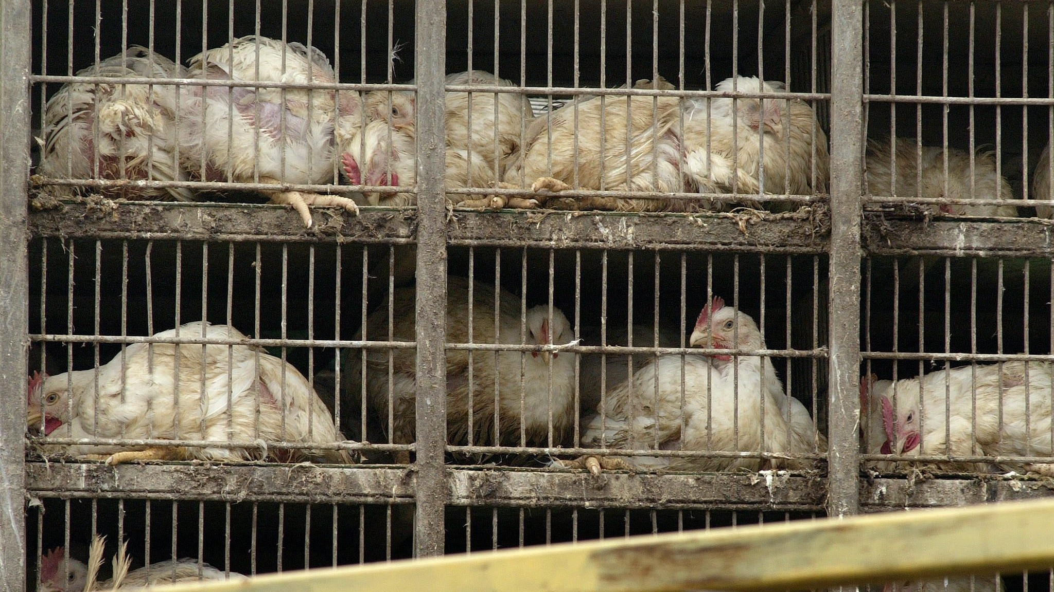 Opponents of Massachusetts Ballot Measure Say Cage-Free Eggs Are War on the Poor