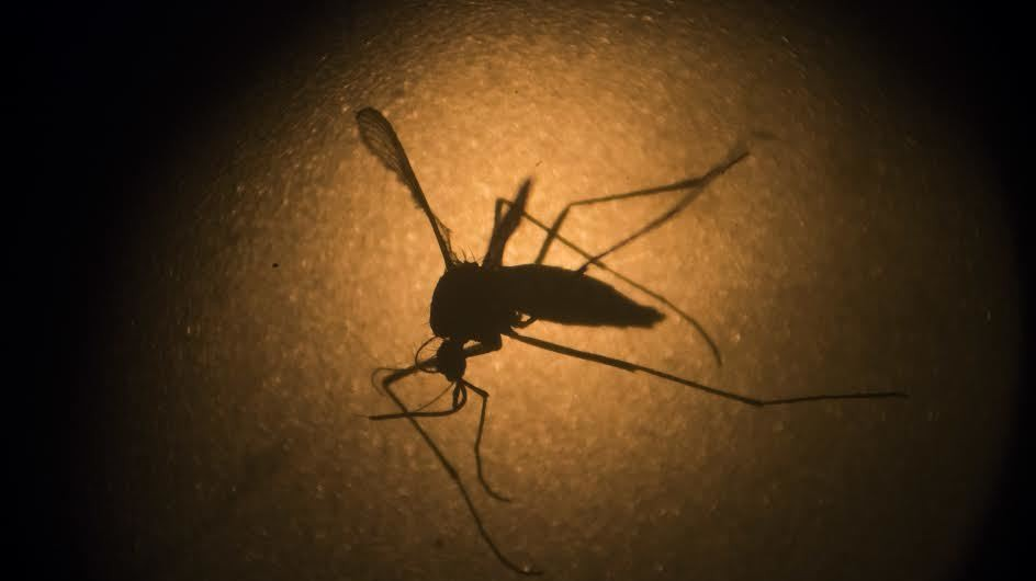 Zika linked to nerve disease that causes paralysis in adults