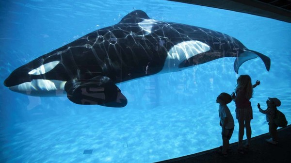 Fin des spectacles d'orques au Sea World de San Diego