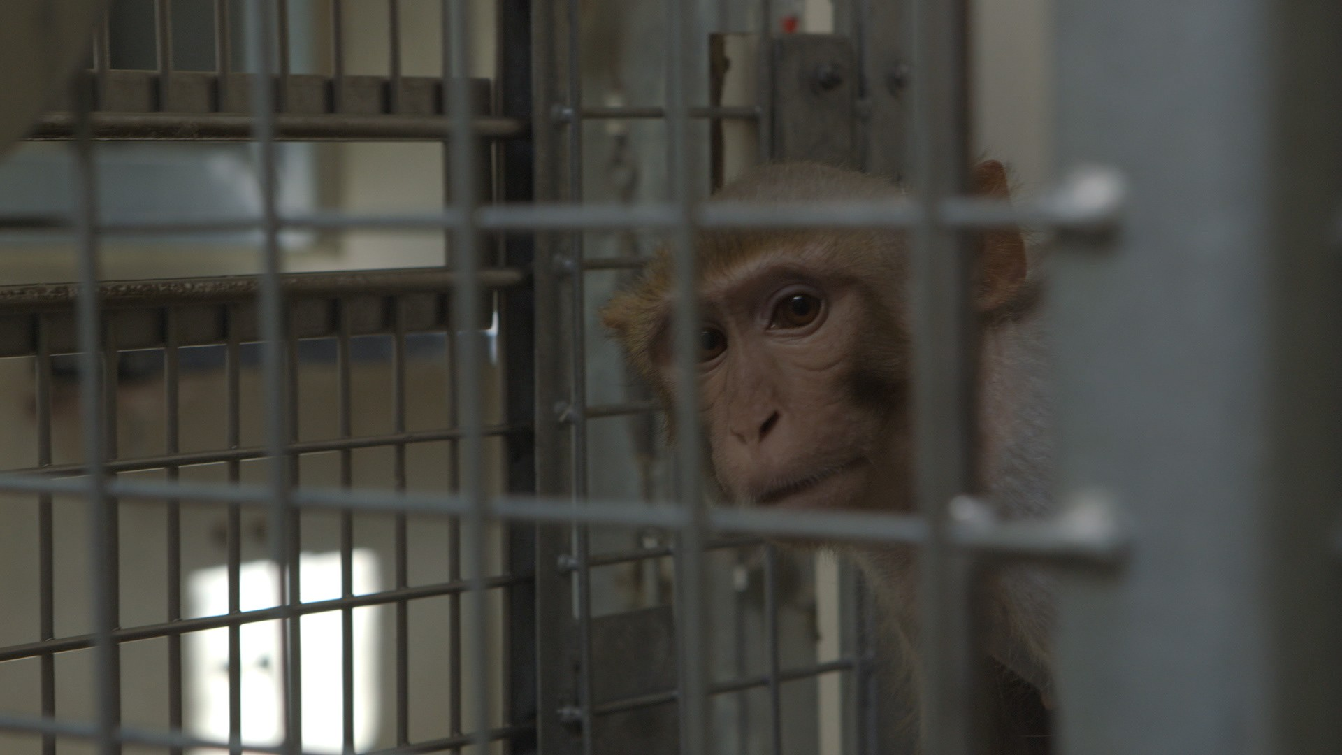 Experimenting on Animals: Inside The Monkey Lab (Trailer)